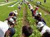 いしかわの新規就農最前線 農家を目指す若者と、農業を支える仕組み